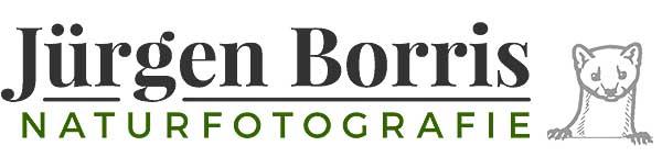 JÜRGEN BORRIS - NATURFOTOGRAFIE