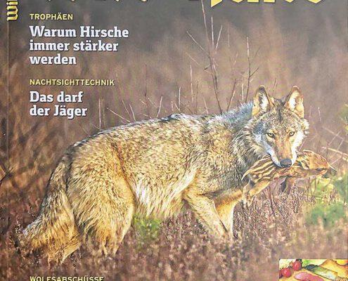 Wild und Hund 08/20